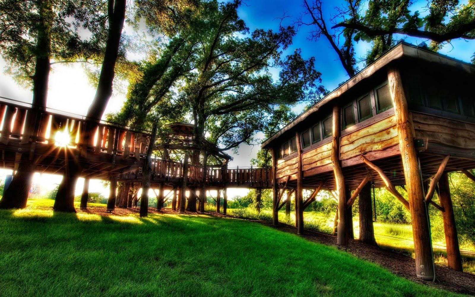 http://3.bp.blogspot.com/-CefZuQsHVnA/UWXprcF-gnI/AAAAAAAAA_4/pQguApXmNhU/s1600/Tree+House+Wallpaper+1680x1050+a.jpg