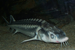 WEIRD FISH WEIRD FISH