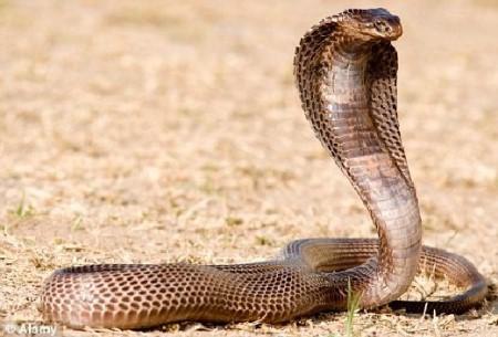 maut-dipatuk-ular