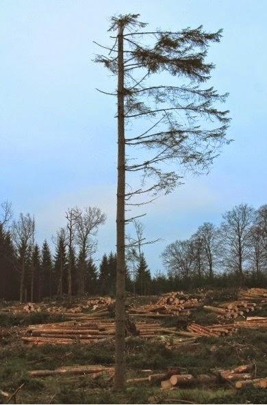 Quel che resta del bosco