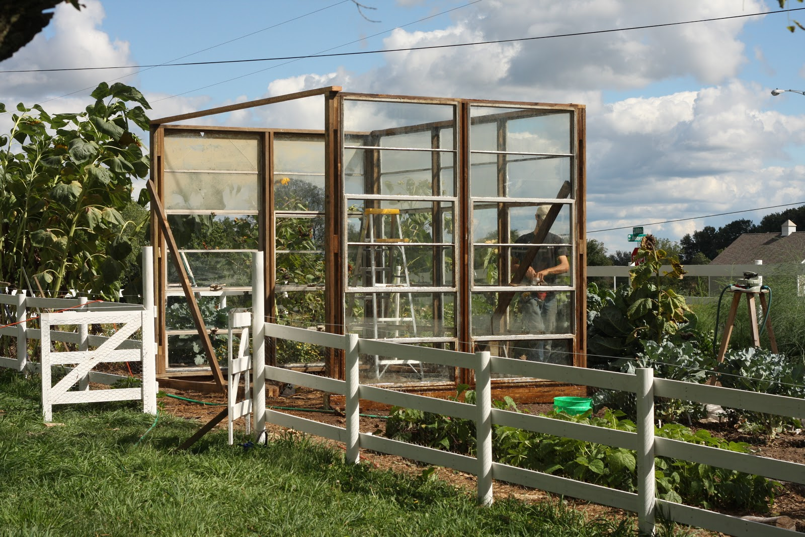 Third Day Farms: Blue Eggs, Crowing Hens, Piggyback Goats...and ...