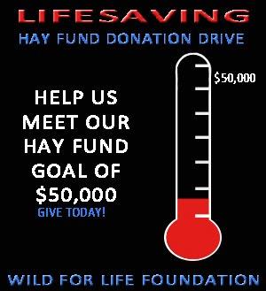 Lifesaving hay Fund