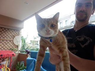 Βρέθηκε στη Νέα Χαλκηδόνα, στη γωνία λεωφόρου Δεκελείας και Ελευθερίου Βενιζέλου αρσενικός πορτοκαλί γάτος