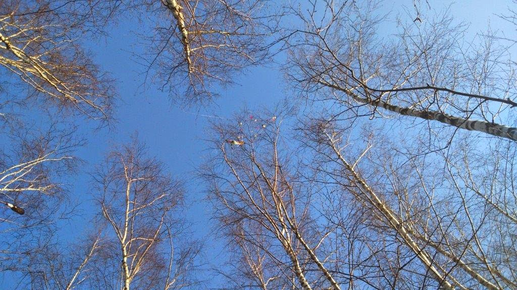 Angst Baum hoch Himmel blau