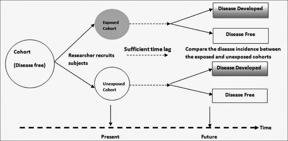 How To Make Sense Of Health Studies  Post 5  Cohort Study
