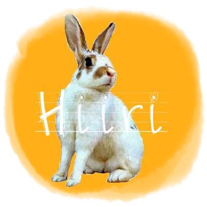 http://rabbitrubbish.blogspot.fi/p/hiiri.html