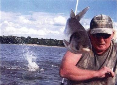 amazing animals interrupting snapshots
