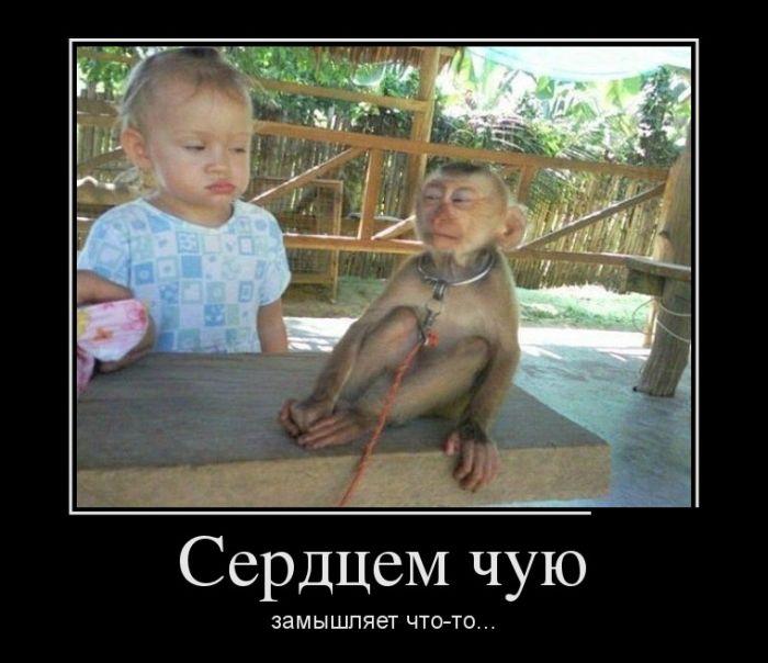 Смешные демотиваторы (17 фото)