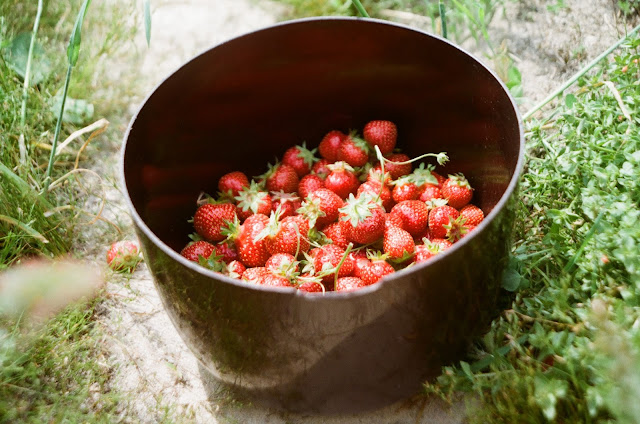 Fresh strawberries in a bowl