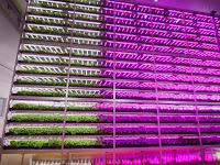 Inilah Pertanian dalam Ruangan Terbesar di Dunia
