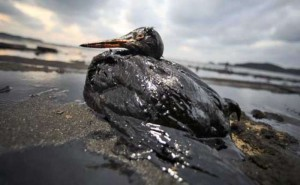 oil spill in the Campos basin