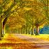 Hình Nền Đẹp - Beautiful wallpapers - Hình Nền Đẹp - Con Đường Mùa Thu