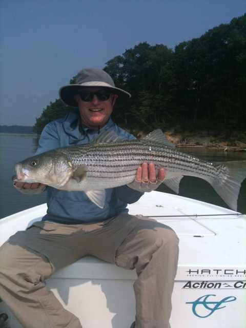 Maine striper fishing reports for Striper fishing report