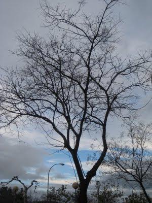 Pensamientos poemas cuentos de isabel ag era espejo for Arboles de hoja caduca