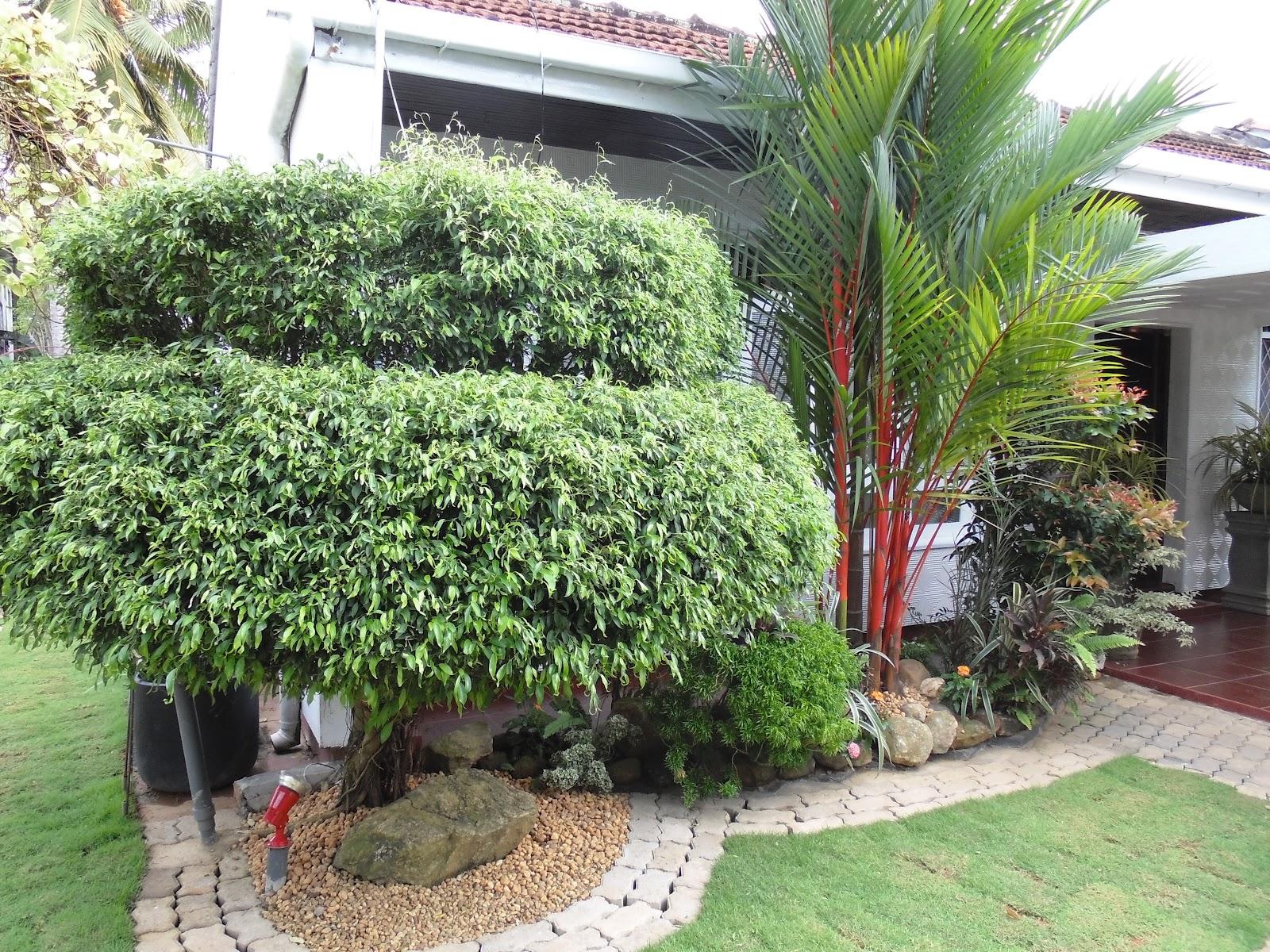 Lassana midula garden service lassana midula garden service for Gardening services