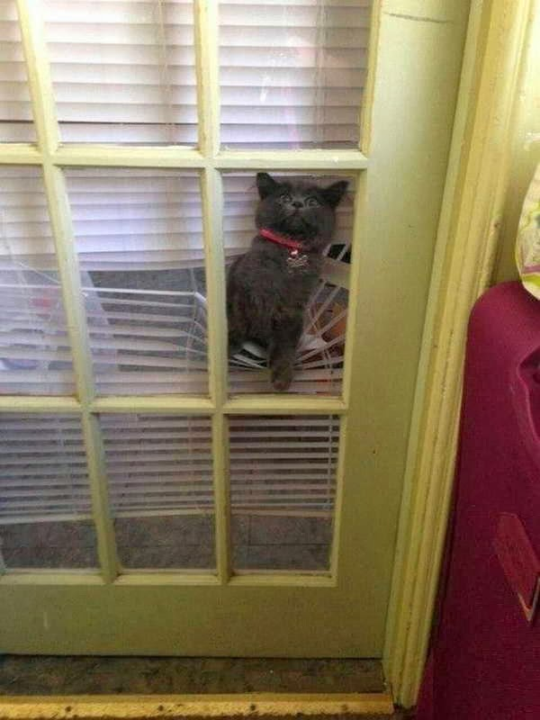 Funny cats - part 80 (40 pics + 10 gifs), cat tries to get in house