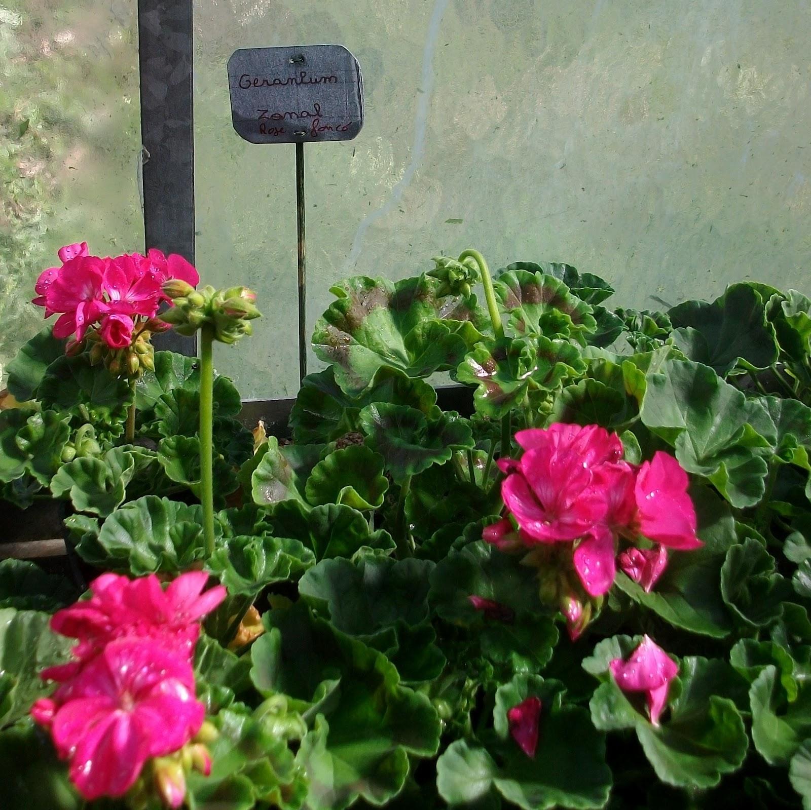 Activit s des el ves de la mfr de chaingy vente de for Vente plantes par correspondance