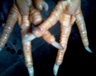 sisik kaki ayam katuranggan