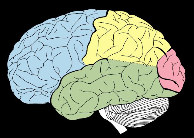 Alteraciones sensoriales papel del fisioterapeuta