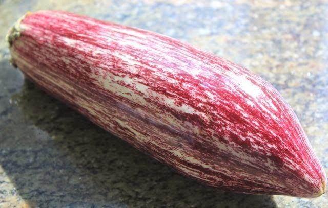 stripy aubergine