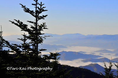Clingman's Dome is in the Great Smoky Mountains, TN