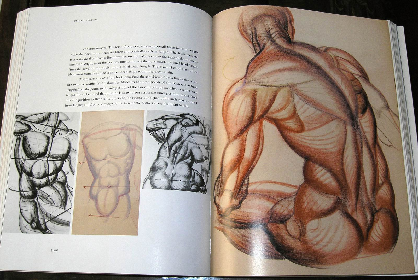 dfga: Studying Anatomy