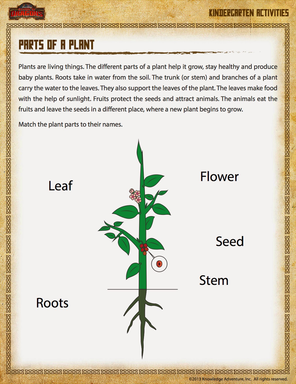 Current image regarding parts of a plant printable