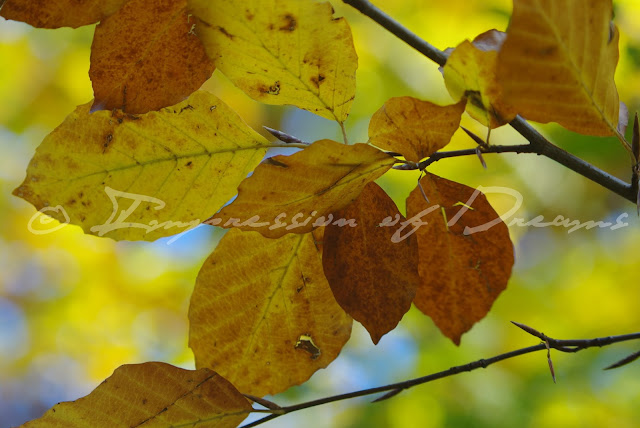 [Photography Tuesday] Autumn Leaves