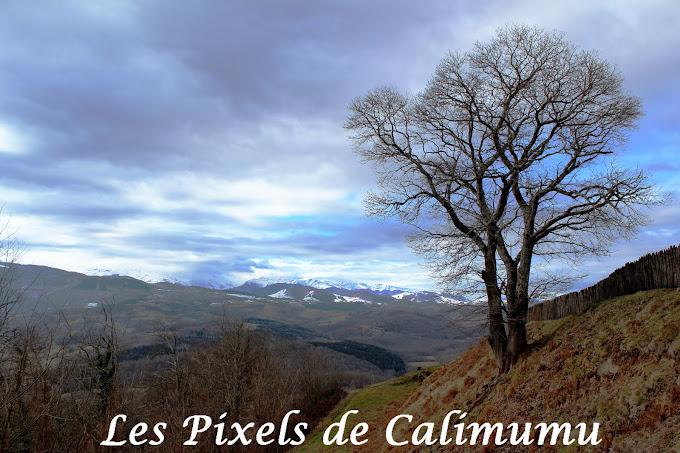 Les Pixels de Calimumu