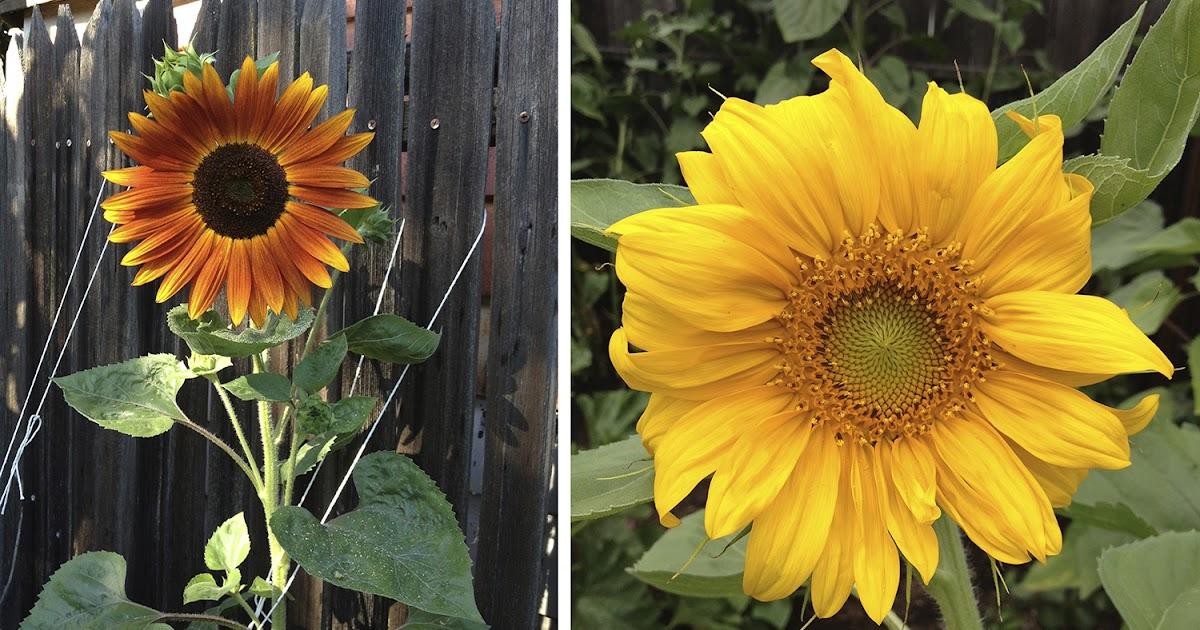 Inspired by my garden