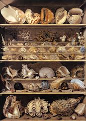 """Caracolas"" Museo del Louvre"