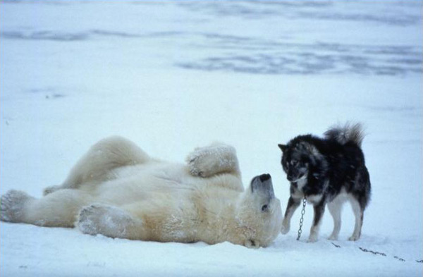 polar bear and dog