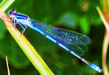 BLUE LIFE SPOTLIGHT