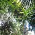 Łódź retro: Palmiarnia Ogrodu Botanicznego