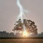 Thor's Oak