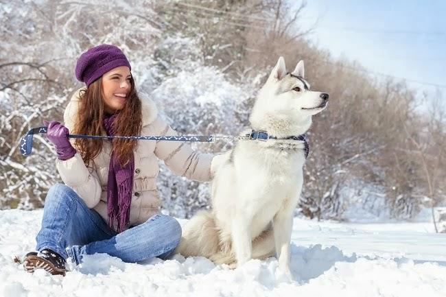 Szelki czy obroża - co jest lepsze dla Twojego psa