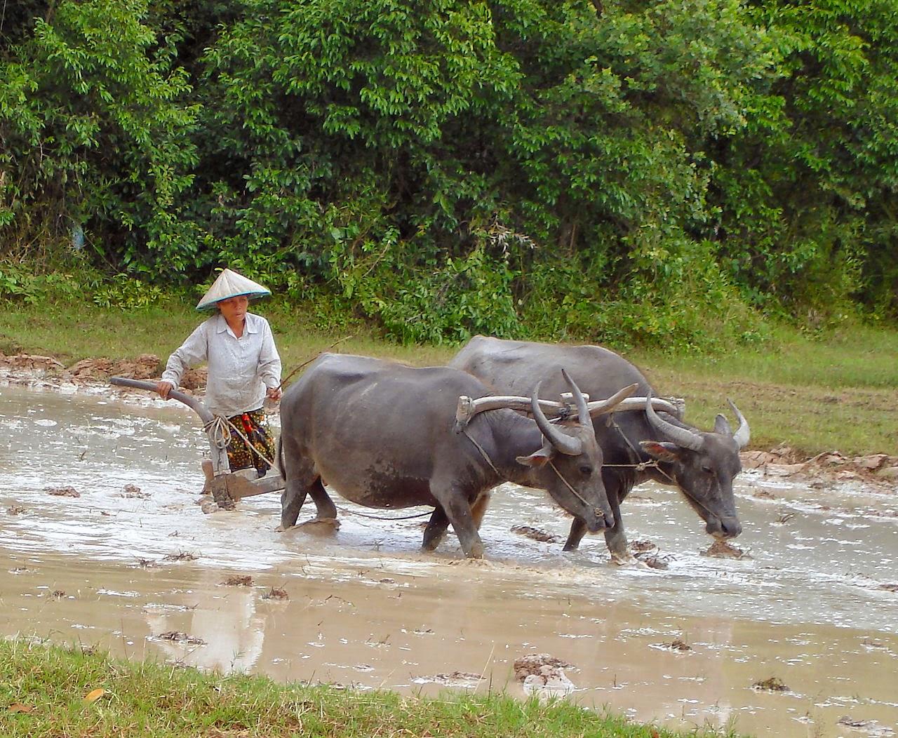 Palaeos, la historia de la Vida en la Tierra: Bisontes vs Búfalos