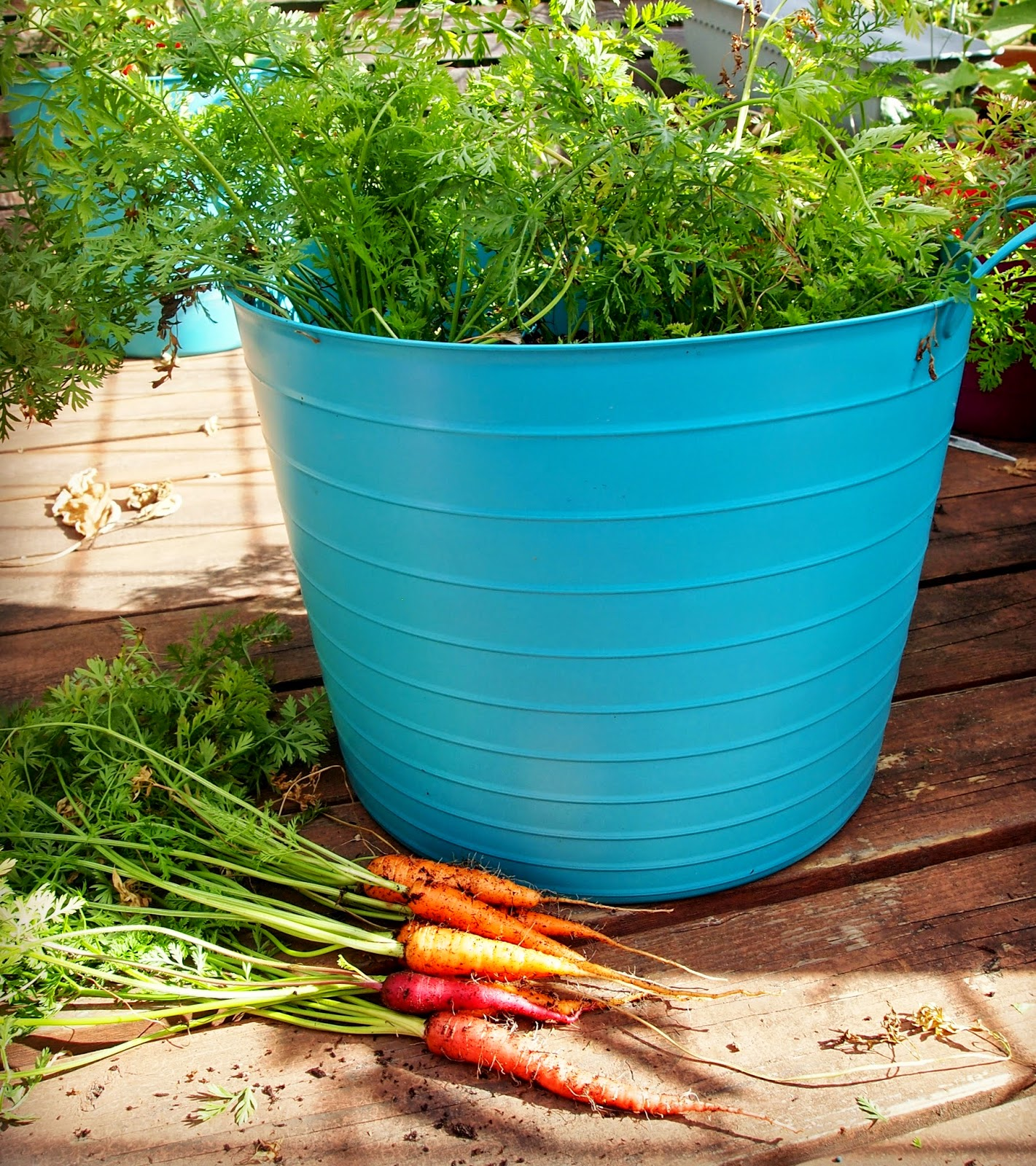 Best Fruits To Grow In Pots: New Wave Domesticity: 10 Plants Perfect For Containers