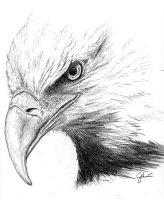 Eagle Pencil Drawing on blue deer head clip art