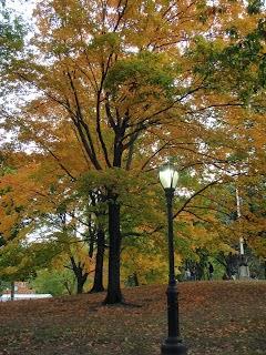 סנטרל פארק ניו-יורק