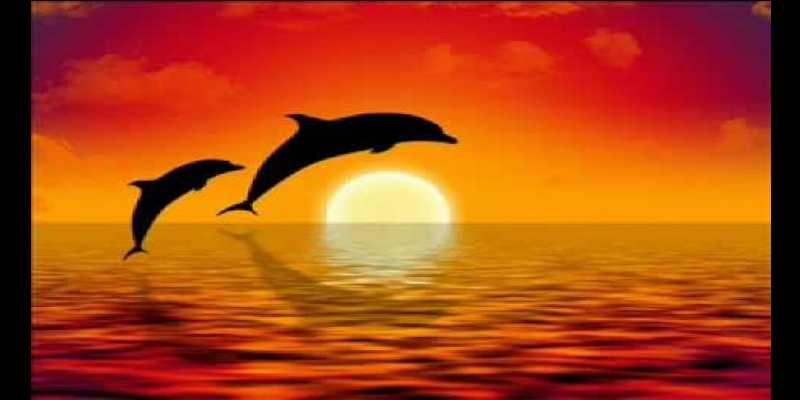 lumba lumba narsis di lovina bali