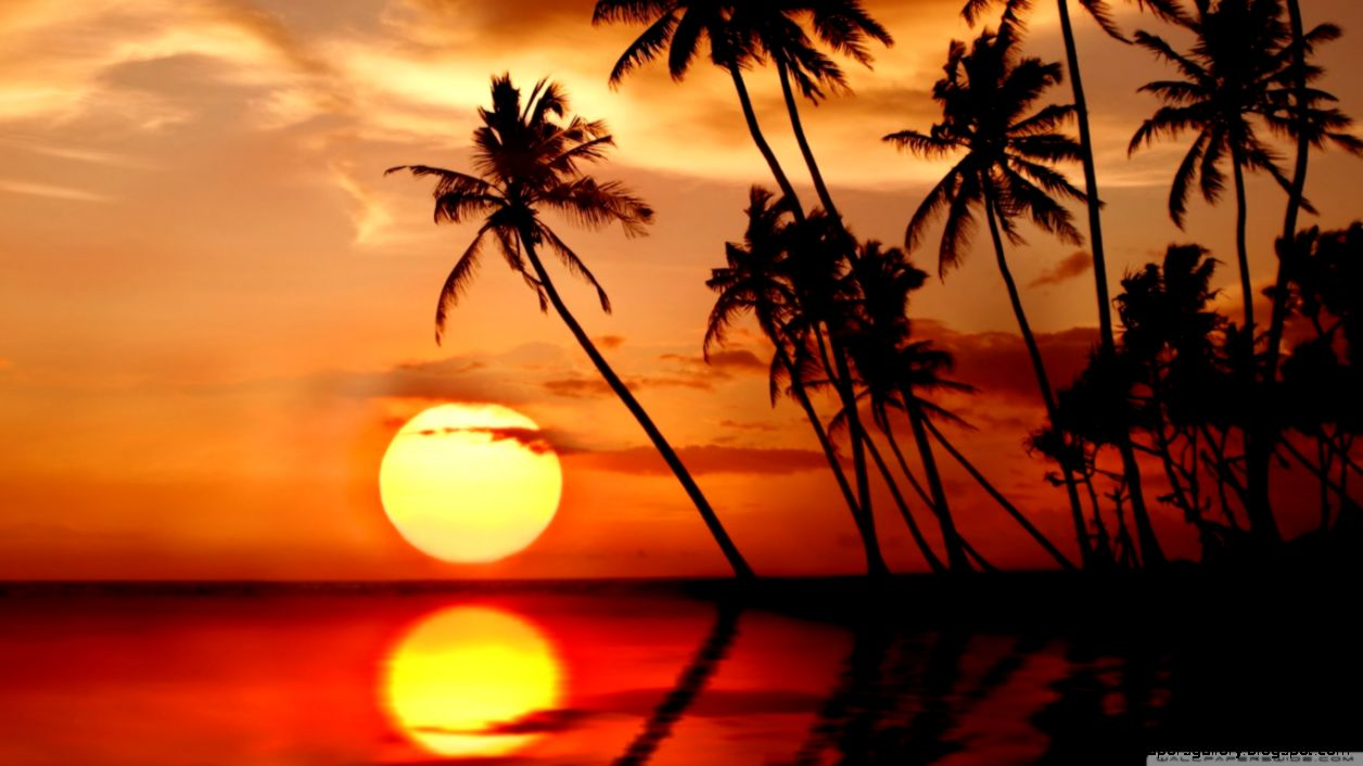 Sunset In Tropical Paradise HD desktop wallpaper  High Definition