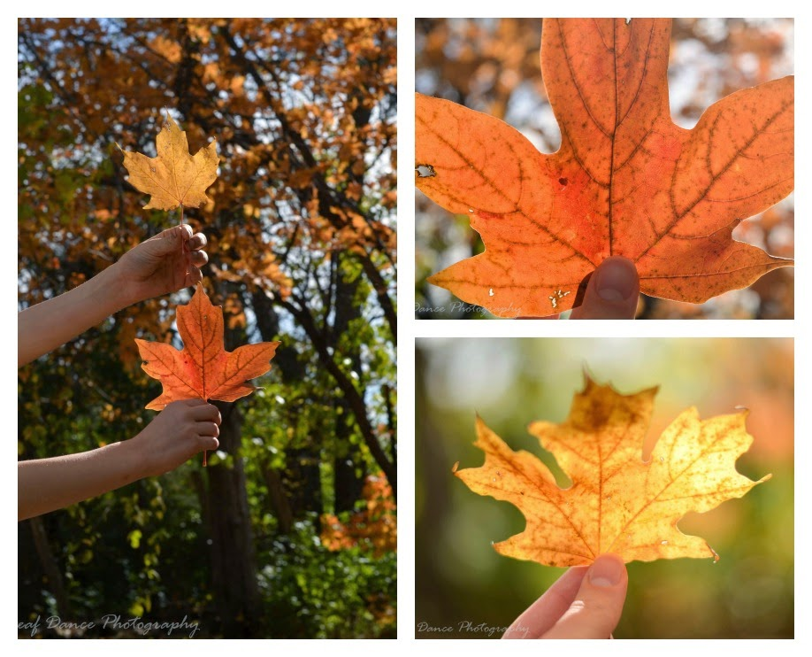 Maple Leaf Portraits