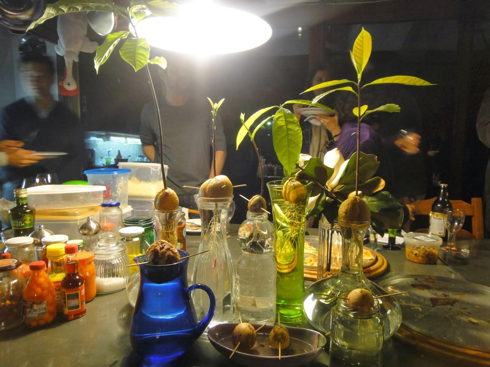 Famosos come-se: É hora de plantar. Abacate, manga, jabuticaba, pimentas  HY14