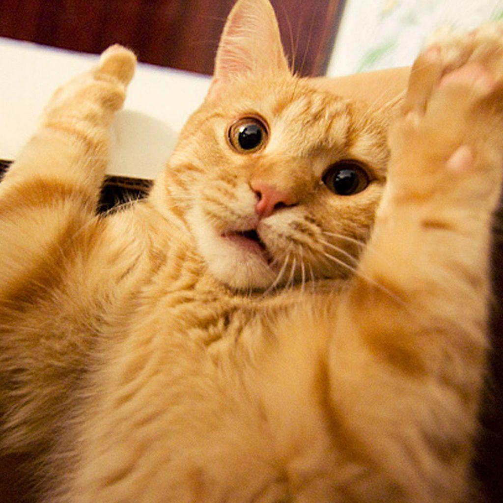 [Image: Cute+animal+tablet+wallpapers+1024x1024+(07).jpg]