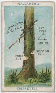 4. Cara Menebang Pohon