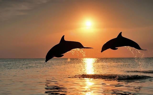 Fotos de Delfines Saltando al Atardecer