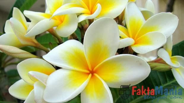 5 Tanaman Bunga Dalam Dunia Supranatural