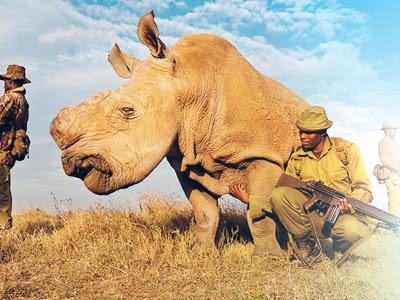 Spesis Hidupan Yang Mungkin Akan Pupus Dalam Masa Terdekat