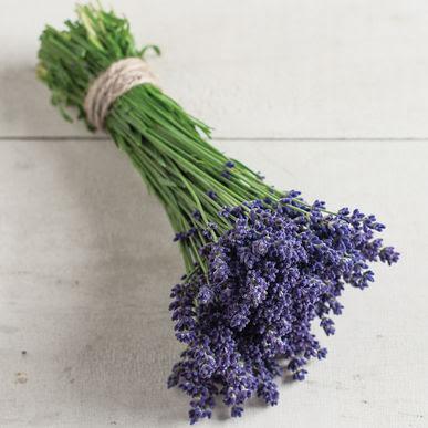 Lavender - Ellagance Purple